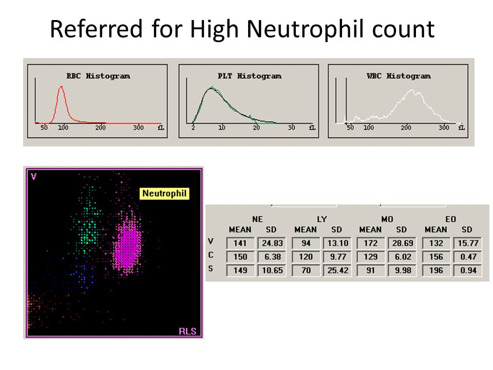 Referred for High Neutrophil count
