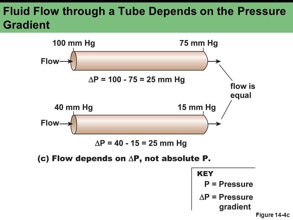 Fluid Flow through a Tube Depends on the Pressure Gradient Figure 14-4c