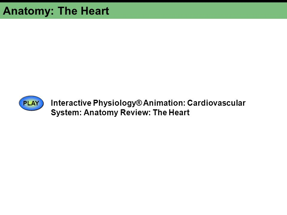 Anatomy: The Heart PLAY Interactive Physiology® Animation: Cardiovascular System: Anatomy Review: The Heart