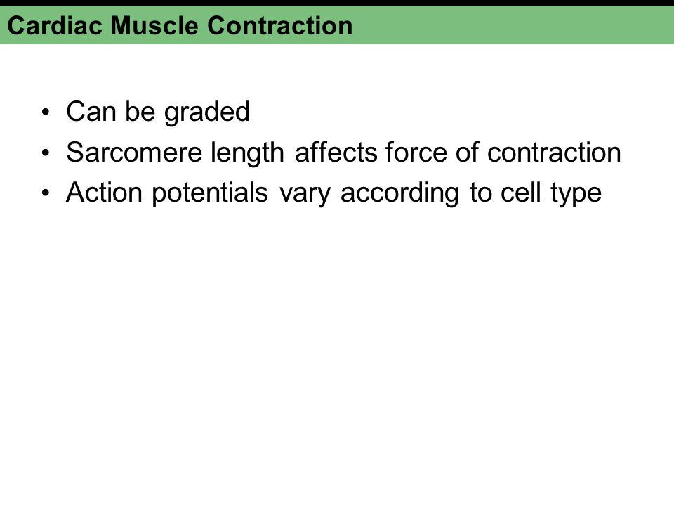 Cardiac Muscle Contraction Can be graded Sarcomere length affects force of contraction Action potentials vary according to cell type