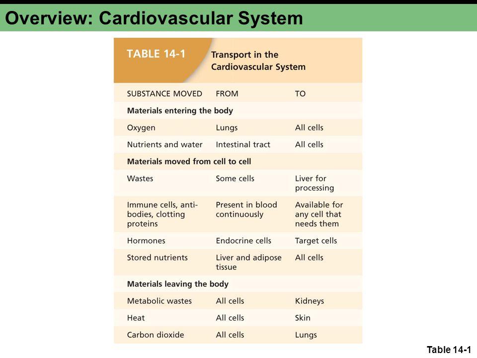 Overview: Cardiovascular System Figure 14-1 Ascending arteries Descending arteries Abdominal aorta Left atrium Left ventricle Heart Right ventricle Renal veins Renal arteries Hepatic vein Right atrium Coronary arteries Pulmonary veins Pulmonary arteries Superior vena cava Inferior vena cava Ascending veins Venous valve Arms Lungs Aorta Trunk Kidneys Pelvis and Legs Liver Digestive tract Hepatic artery Hepatic portal vein CapillariesArteriesVeins Head and Brain