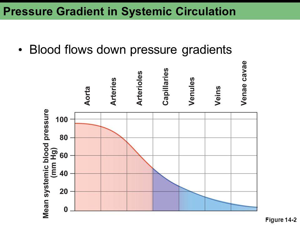 Pressure Gradient in Systemic Circulation Blood flows down pressure gradients Figure 14-2