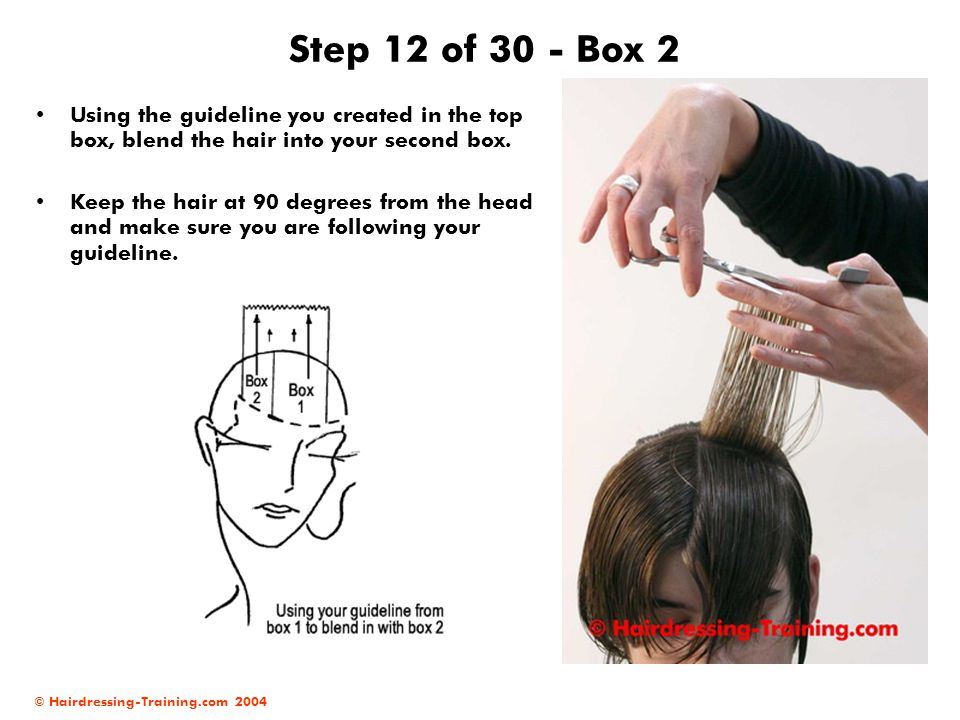 © Hairdressing-Training.com 2004 Step 12 of 30 - Box 2 Using the guideline you created in the top box, blend the hair into your second box. Keep the h