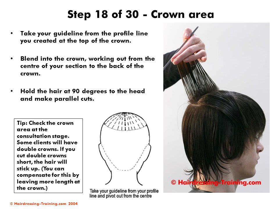 © Hairdressing-Training.com 2004 Step 18 of 30 - Crown area Take your guideline from the profile line you created at the top of the crown. Blend into