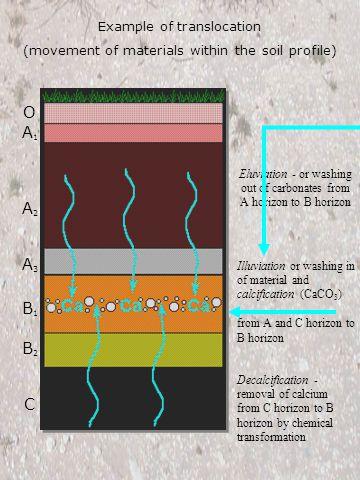Soil Profile and Horizons O horizon -- abundant organic matter (OM); dark colored.