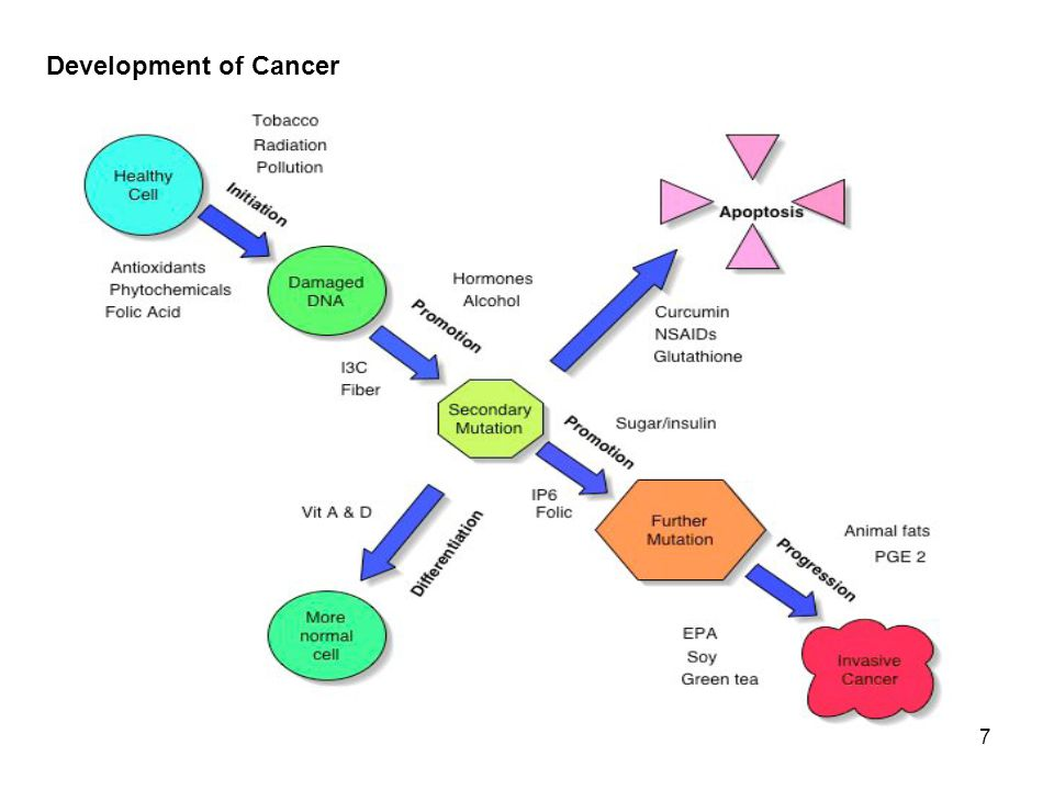 7 Development of Cancer