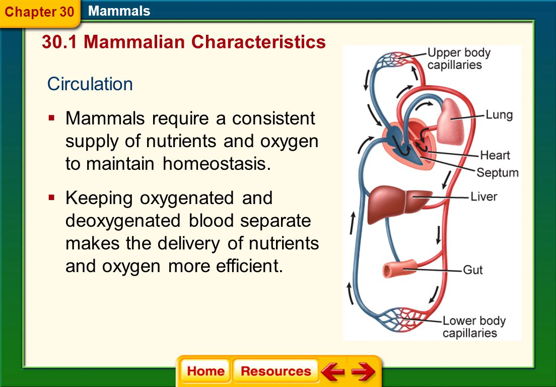 Respiration  High levels of oxygen are required to maintain a high level of metabolism. Mammals  Mammals are the only animals that have a diaphragm.