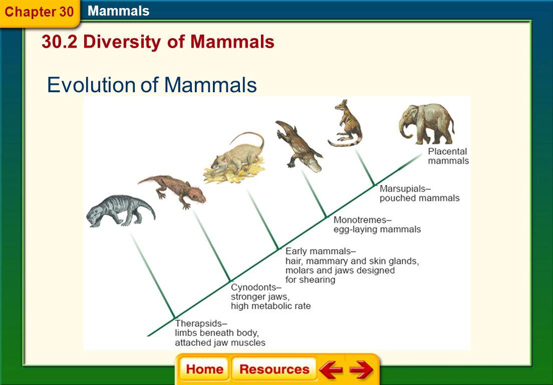 Mammals 30.2 Diversity of Mammals Chapter 30