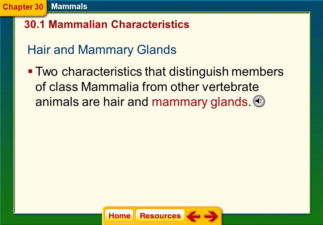 Hair and Mammary Glands  Two characteristics that distinguish members of class Mammalia from other vertebrate animals are hair and mammary glands.