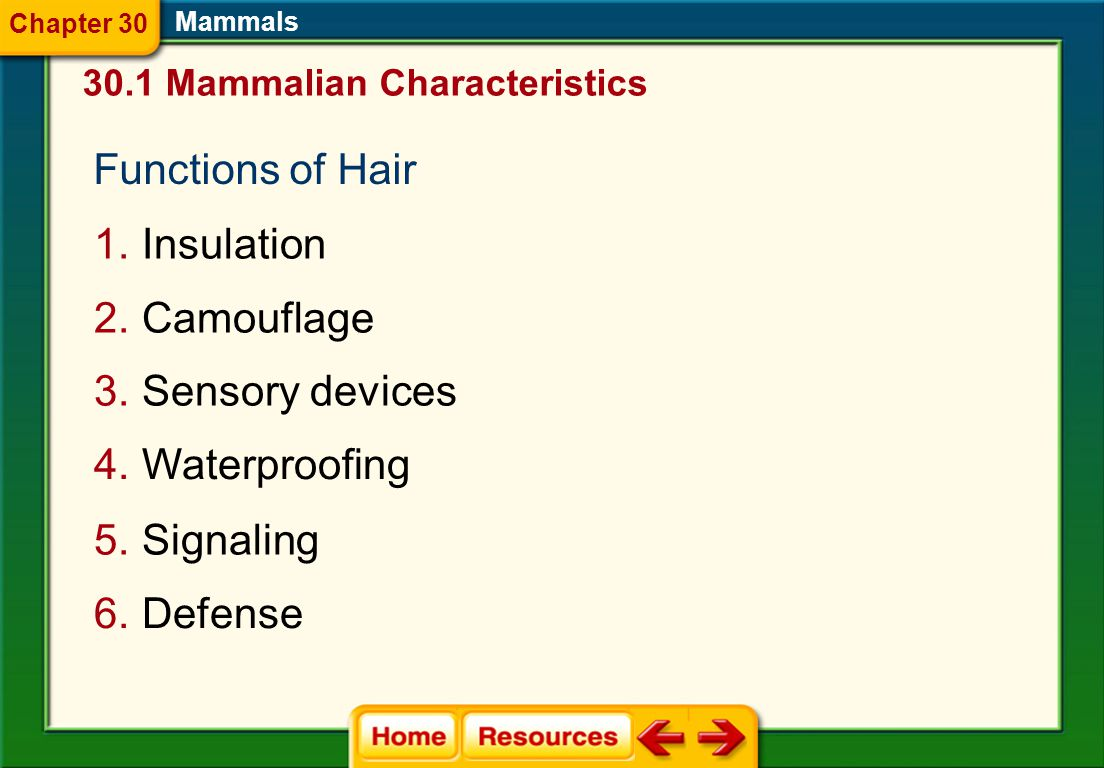 Hair and Mammary Glands  Two characteristics that distinguish members of class Mammalia from other vertebrate animals are hair and mammary glands. 30