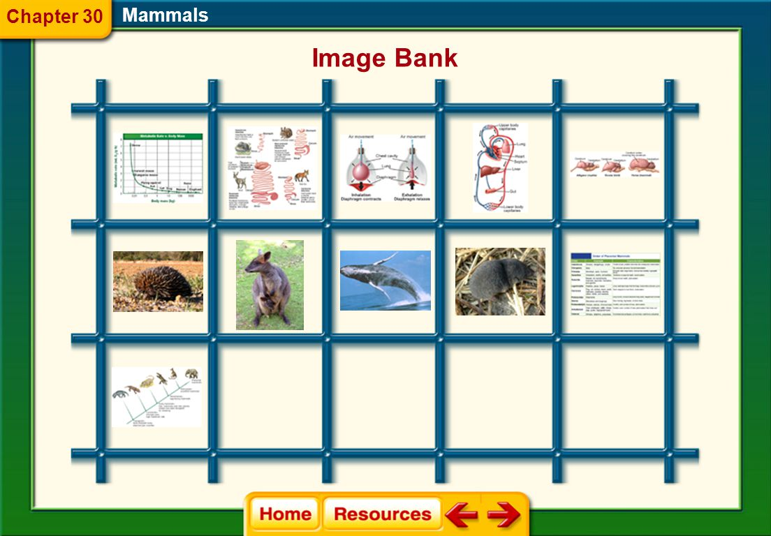 Glencoe Biology Transparencies Mammals Chapter 30