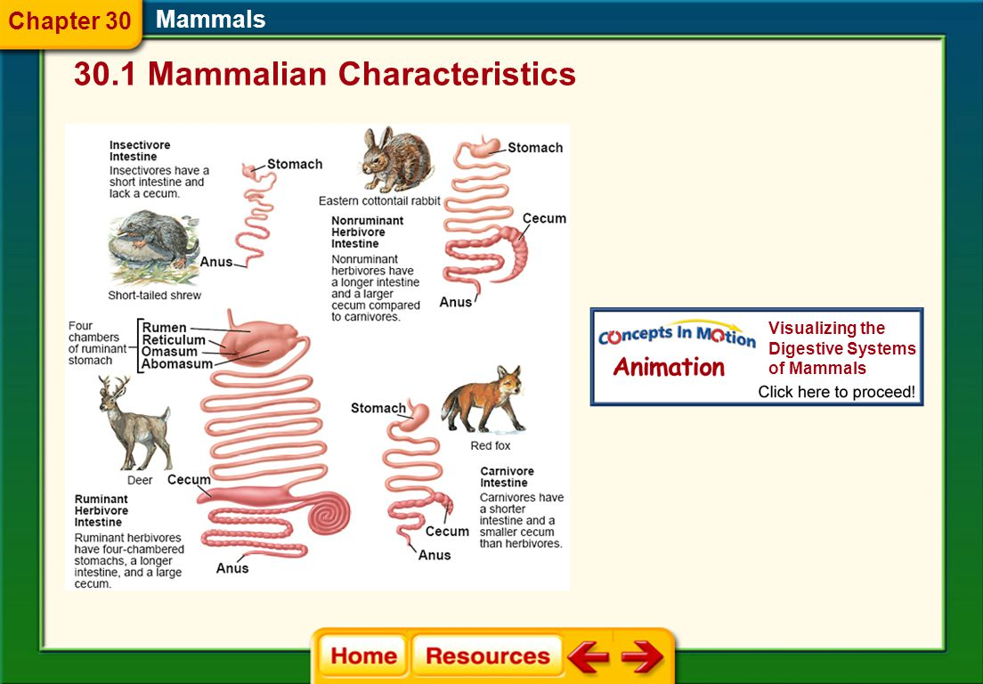 Mammals 30.1 Mammalian Characteristics Chapter 30 Visualizing the Digestive Systems of Mammals