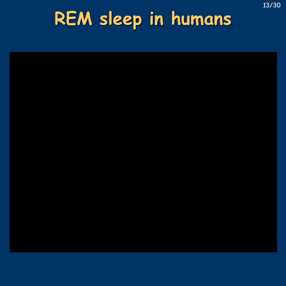 REM sleep in humans 13/30