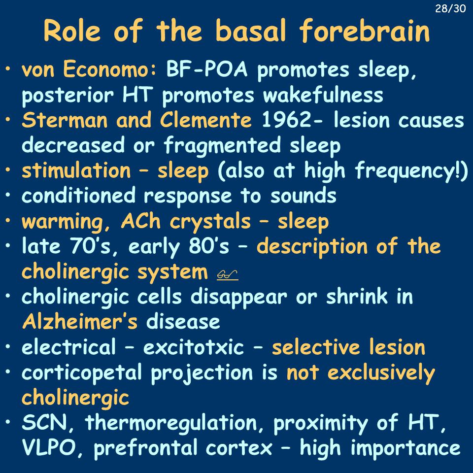 Role of the basal forebrain von Economo: BF-POA promotes sleep, posterior HT promotes wakefulness Sterman and Clemente 1962- lesion causes decreased or fragmented sleep stimulation – sleep (also at high frequency!) conditioned response to sounds warming, ACh crystals – sleep late 70's, early 80's – description of the cholinergic system   cholinergic cells disappear or shrink in Alzheimer's disease electrical – excitotxic – selective lesion corticopetal projection is not exclusively cholinergic SCN, thermoregulation, proximity of HT, VLPO, prefrontal cortex – high importance 28/30