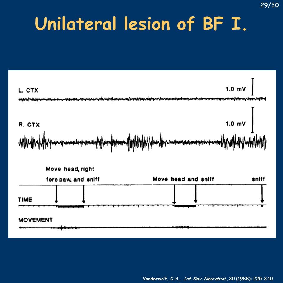 Unilateral lesion of BF I. Vanderwolf, C.H., Int. Rev. Neurobiol., 30 (1988): 225-340 29/30