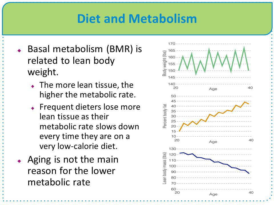Diet and Metabolism  Basal metabolism (BMR) is related to lean body weight.  The more lean tissue, the higher the metabolic rate.  Frequent dieters