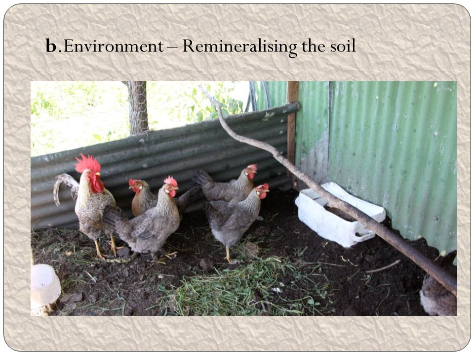 b.Environment – Remineralising the soil