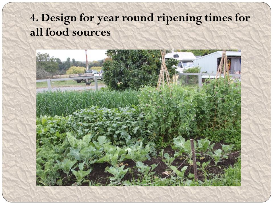 4. Design for year round ripening times for all food sources