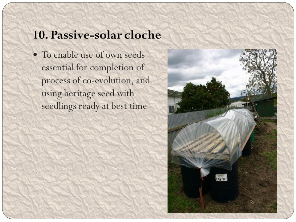 10. Passive-solar cloche To enable use of own seeds essential for completion of process of co-evolution, and using heritage seed with seedlings ready