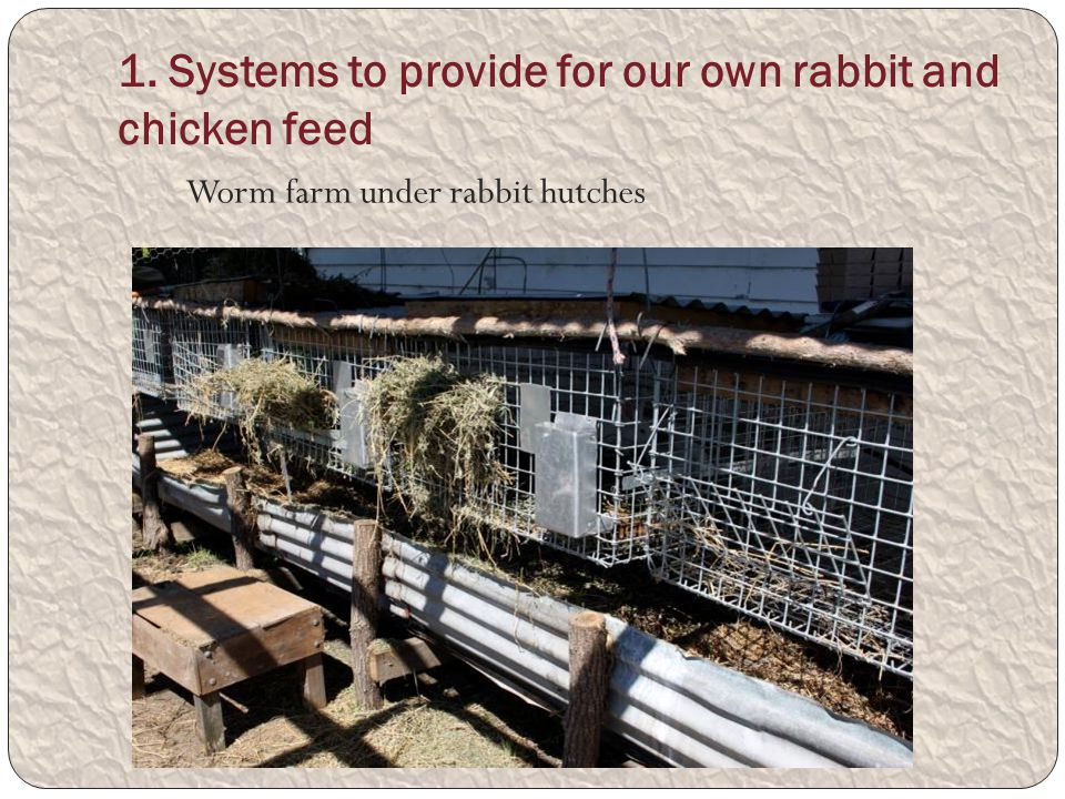 1. Systems to provide for our own rabbit and chicken feed Worm farm under rabbit hutches