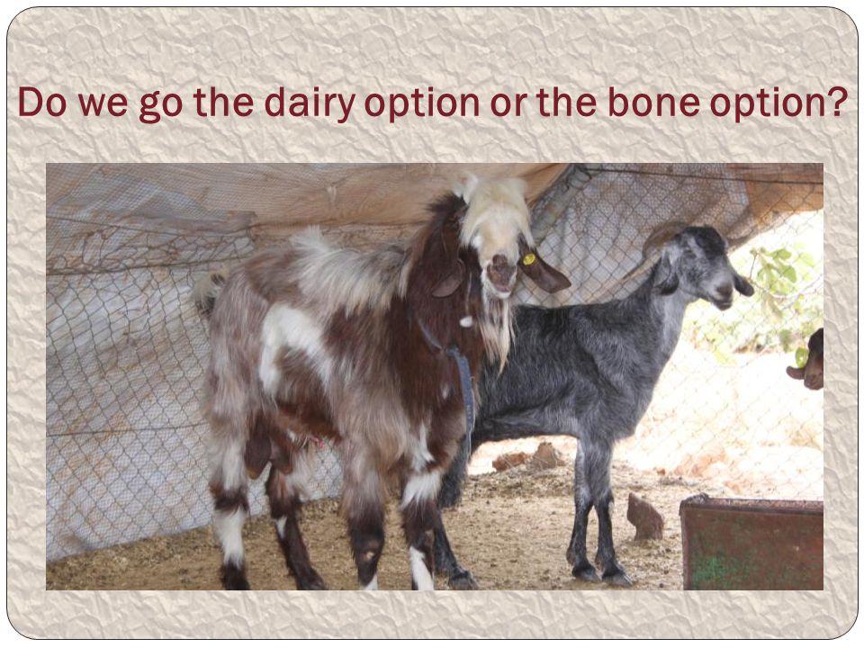 Do we go the dairy option or the bone option