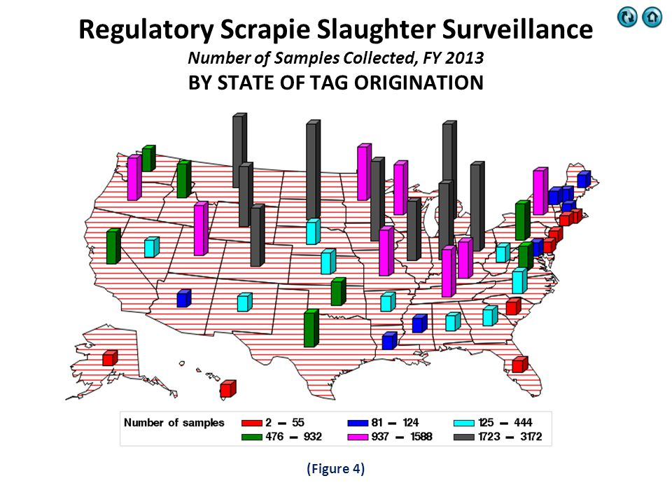 (Figure 4) Regulatory Scrapie Slaughter Surveillance Number of Samples Collected, FY 2013 BY STATE OF TAG ORIGINATION