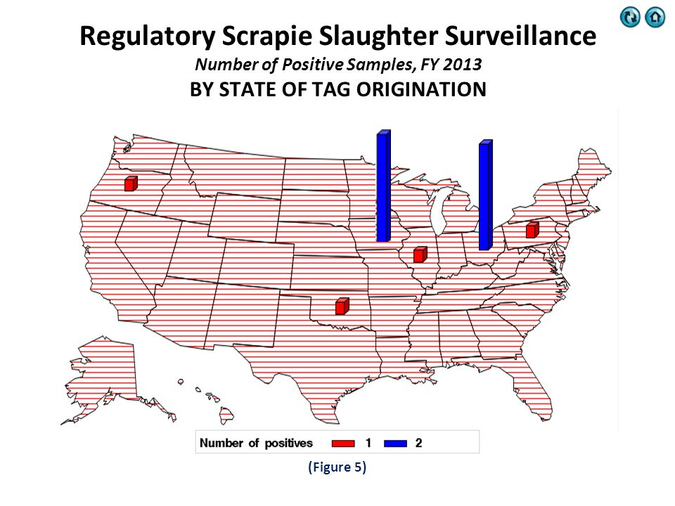 (Figure 5) Regulatory Scrapie Slaughter Surveillance Number of Positive Samples, FY 2013 BY STATE OF TAG ORIGINATION