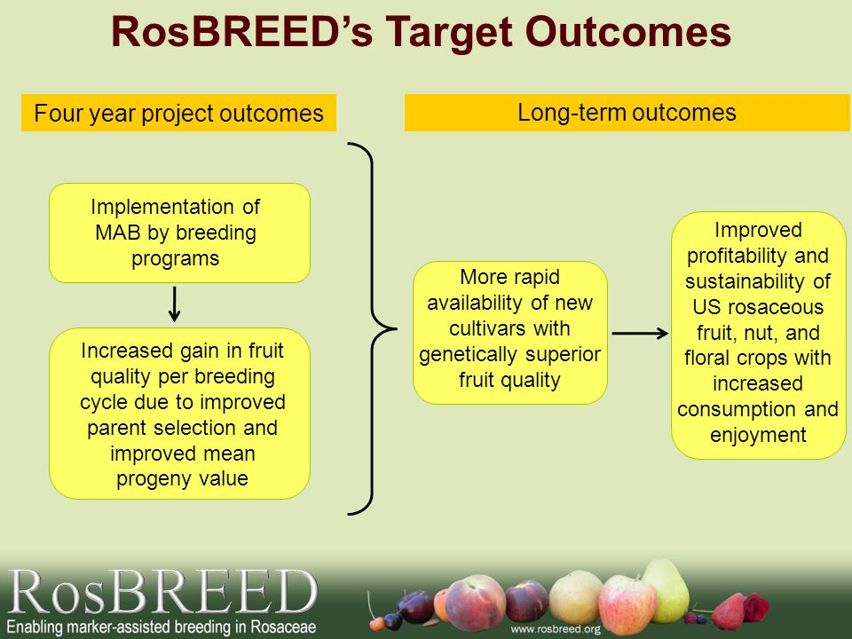 Long-term outcomes Four year project outcomes Increased gain in fruit quality per breeding cycle due to improved parent selection and improved mean progeny value More rapid availability of new cultivars with genetically superior fruit quality Improved profitability and sustainability of US rosaceous fruit, nut, and floral crops with increased consumption and enjoyment Implementation of MAB by breeding programs RosBREED's Target Outcomes