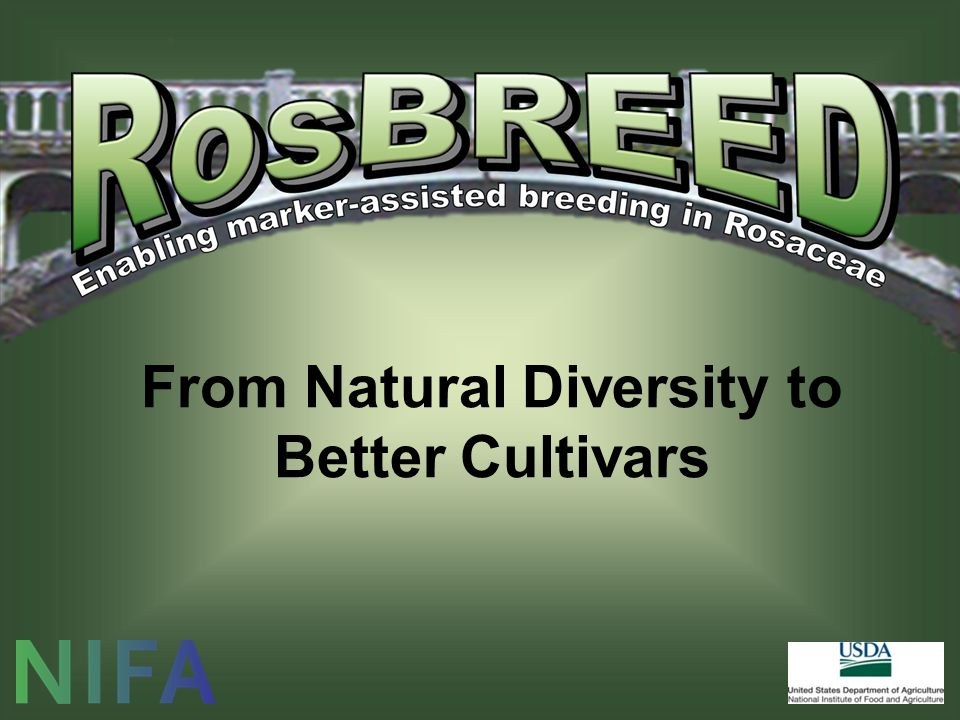 From Natural Diversity to Better Cultivars
