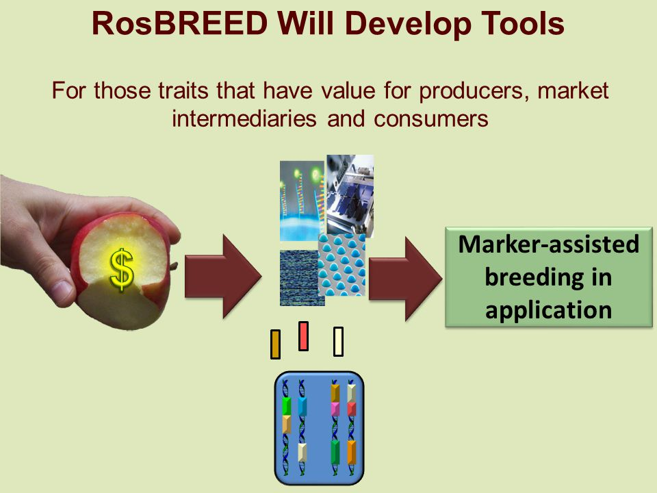 RosBREED Will Develop Tools Marker-assisted breeding in application For those traits that have value for producers, market intermediaries and consumers