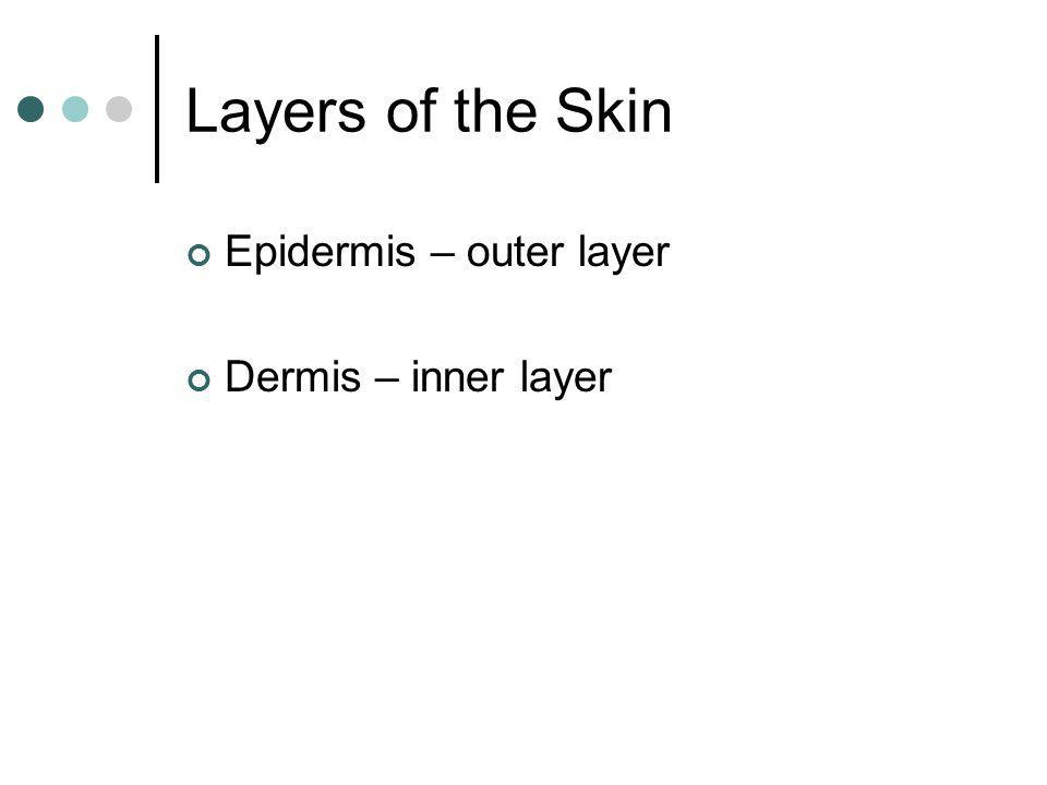 Layers of the Skin Epidermis – outer layer Dermis – inner layer
