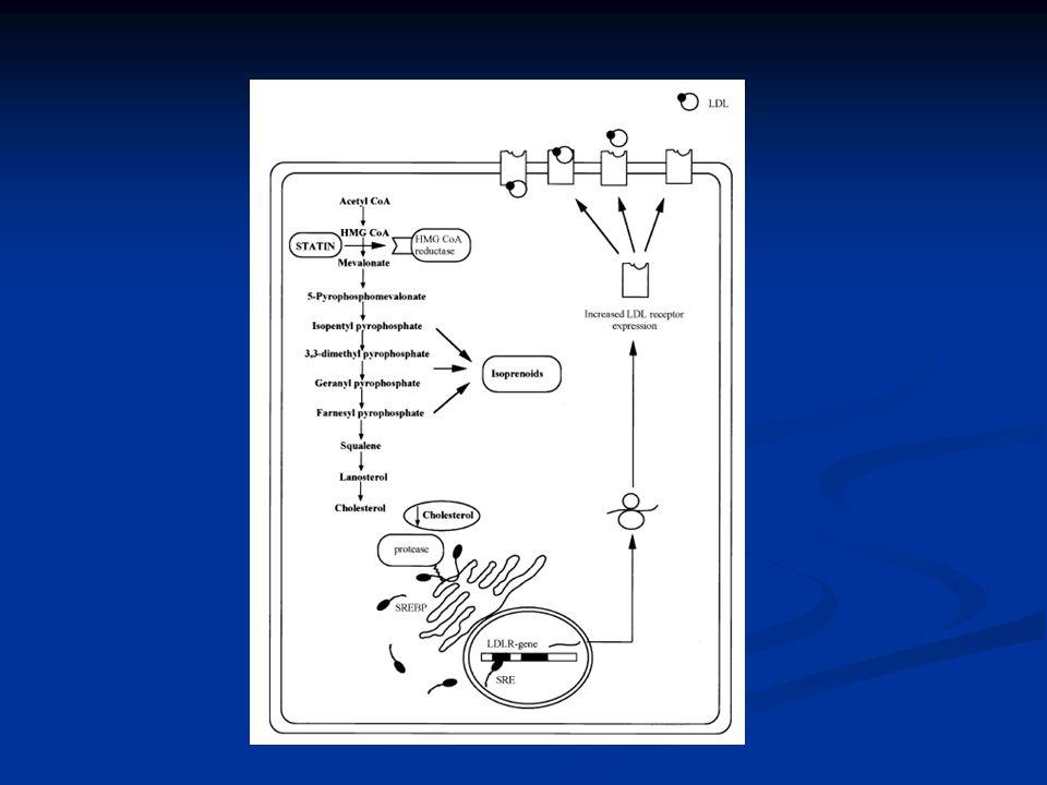 S T A T I N S Natural (fungal fermentation): lovastatin, simvastatin, pravastatin Natural (fungal fermentation): lovastatin, simvastatin, pravastatin Synthetic: fluvastatin, atorvastatin, rosuvastatin Synthetic: fluvastatin, atorvastatin, rosuvastatin Metabolized by CYP 3A4: lovastatin, simvastatin, atorvastatin Metabolized by CYP 3A4: lovastatin, simvastatin, atorvastatin CYP 2C9 for fluvastatin CYP 2C9 for fluvastatin Pravastatin does not use CYP P450 Pravastatin does not use CYP P450 Hydrophilic statins: pravastatin, fluvastatin Hydrophilic statins: pravastatin, fluvastatin