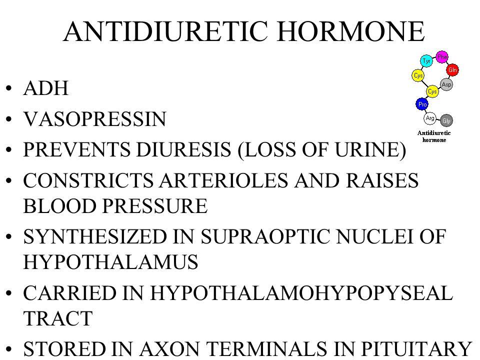 HORMONES OF THE HYPOTHALAMUS & ADENOHYPOPHYSIS ADENOHYPOPHYSEAL HORMONES TSH ACTH FSH LH PRL GH MSH LIPOTROPIN RELEASING AND INHIBITING HORMONES FROM THE HYPOTHALAMUS TRH CRH GnRH GnIH PRH/PIH GH-RH/SOMATOSTATIN