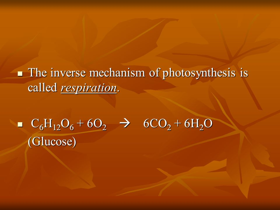 The inverse mechanism of photosynthesis is called respiration.