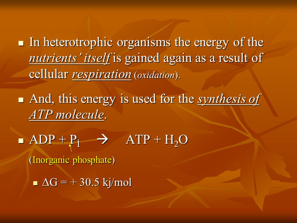 In heterotrophic organisms the energy of the nutrients' itself is gained again as a result of cellular respiration (oxidation).