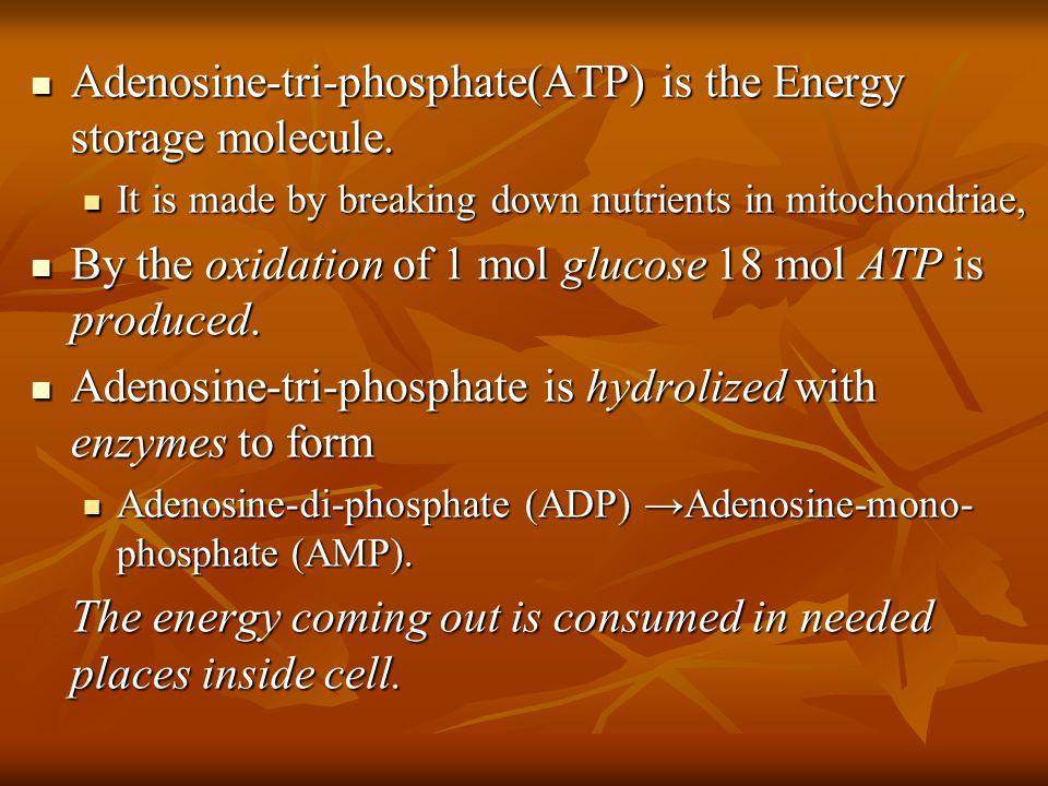 Adenosine-tri-phosphate(ATP) is the Energy storage molecule.