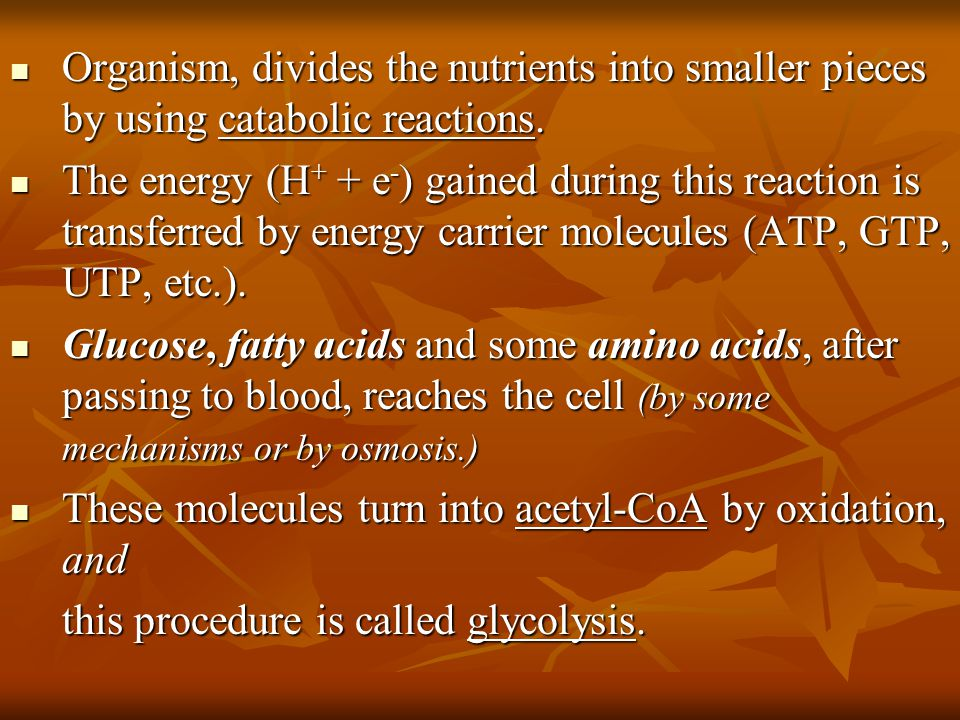 Organism, divides the nutrients into smaller pieces by using catabolic reactions. Organism, divides the nutrients into smaller pieces by using catabol