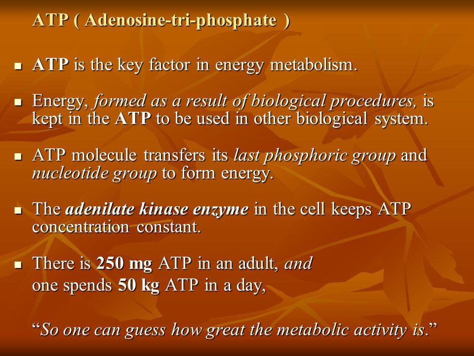 ATP ( Adenosine-tri-phosphate ) ATP is the key factor in energy metabolism.