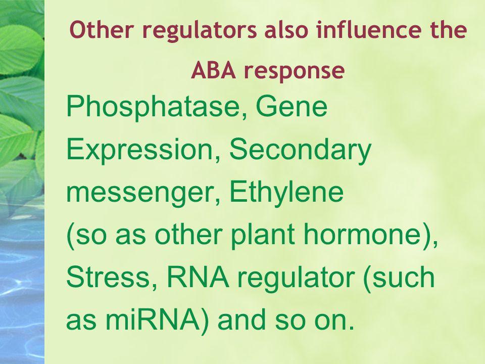 Other regulators also influence the ABA response Phosphatase, Gene Expression, Secondary messenger, Ethylene (so as other plant hormone), Stress, RNA