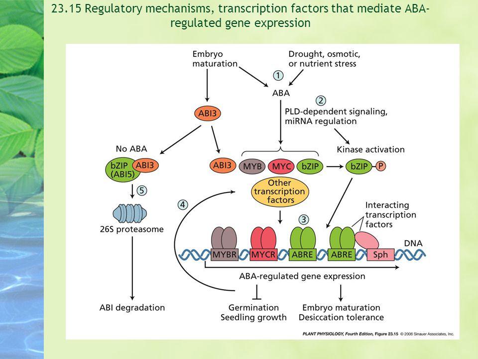 23.15 Regulatory mechanisms, transcription factors that mediate ABA- regulated gene expression