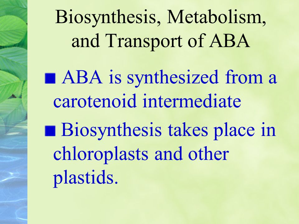 Biosynthesis, Metabolism, and Transport of ABA ABA is synthesized from a carotenoid intermediate Biosynthesis takes place in chloroplasts and other pl