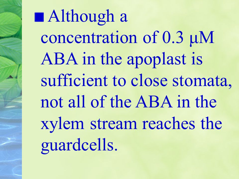 Although a concentration of 0.3 μM ABA in the apoplast is sufficient to close stomata, not all of the ABA in the xylem stream reaches the guardcells.