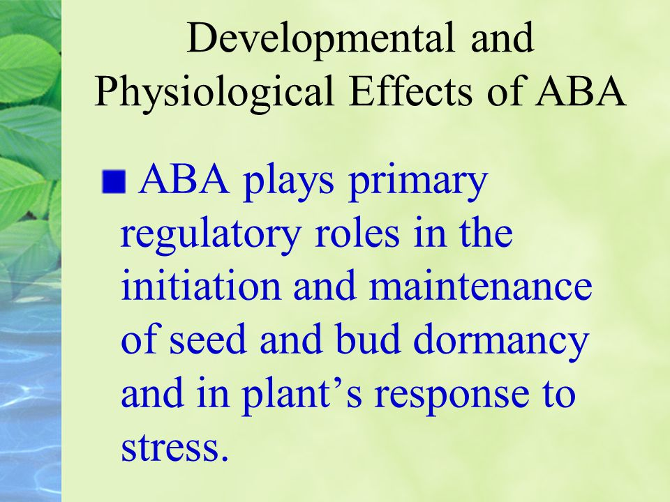 Developmental and Physiological Effects of ABA ABA plays primary regulatory roles in the initiation and maintenance of seed and bud dormancy and in pl
