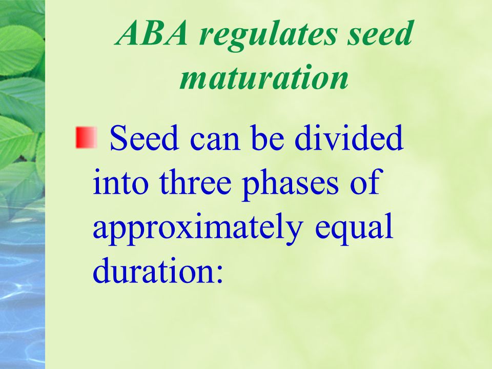 ABA regulates seed maturation Seed can be divided into three phases of approximately equal duration: