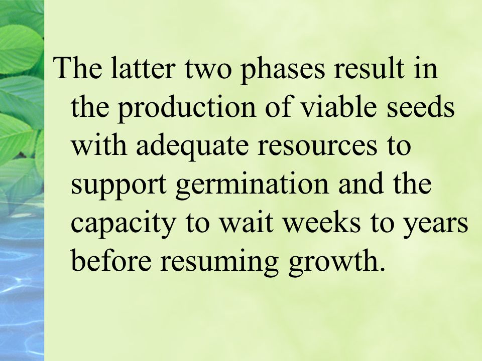 The latter two phases result in the production of viable seeds with adequate resources to support germination and the capacity to wait weeks to years