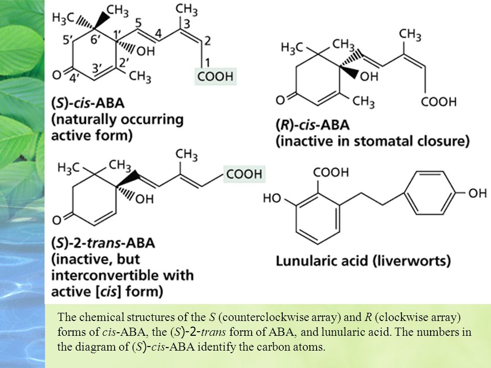 Occurrence, Chemical Structure, and Measurement of ABA ABA is a ubiquitous plant hormone in vascular plants.