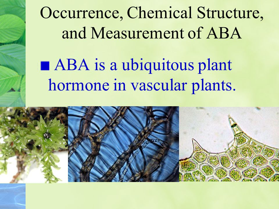 ABA closes stomata in response to water stress Elucidation of the roles of ABA in freezing, salt, and water stress led to the characterization of ABA as a stress hormone.