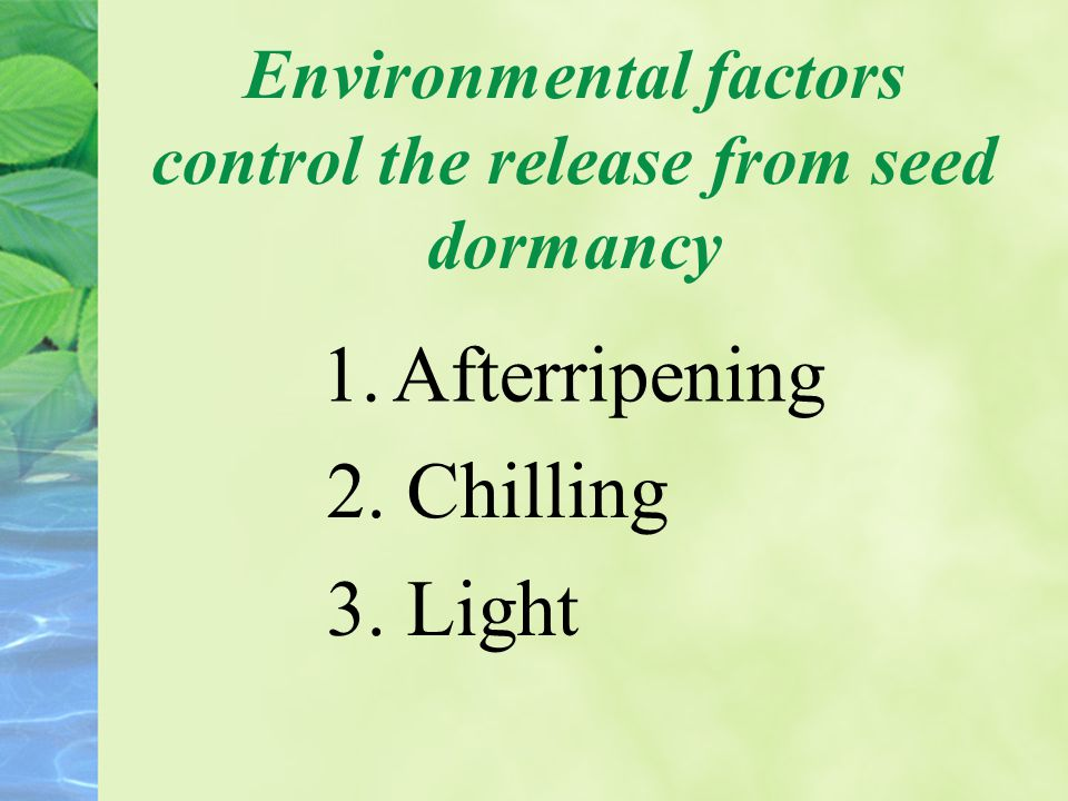 Environmental factors control the release from seed dormancy 1.Afterripening 2. Chilling 3. Light