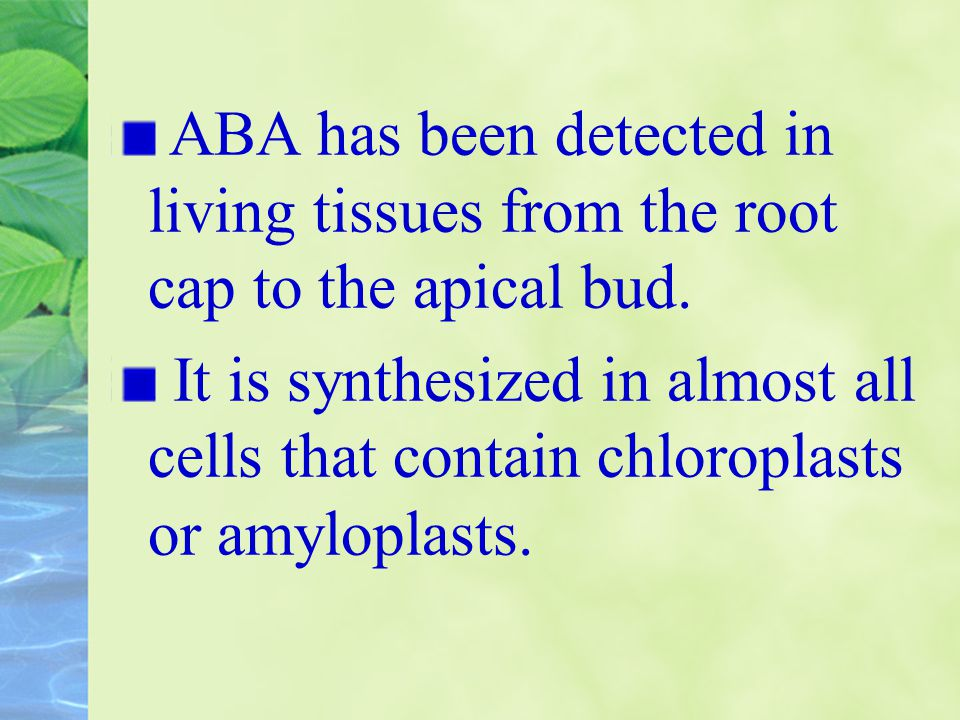 ABA has been detected in living tissues from the root cap to the apical bud. It is synthesized in almost all cells that contain chloroplasts or amylop