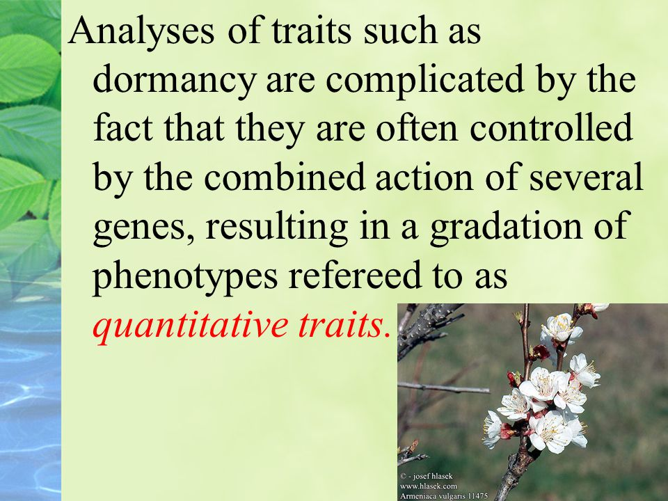 Analyses of traits such as dormancy are complicated by the fact that they are often controlled by the combined action of several genes, resulting in a